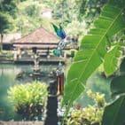 Blue & Green Hummingbird Windchime - 74cm Hanging  Garden Sun Catcher Wind Chimes